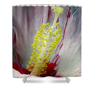 Peppermint Flame 03a Shower Curtain