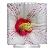 Peppermint Flame 04 Shower Curtain