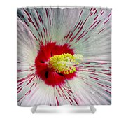 Peppermint Flame 04a Shower Curtain