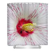 Peppermint Flame 05 Shower Curtain