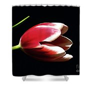 Peppermint Tulip Shower Curtain