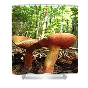 Peppery Bolete Shower Curtain
