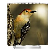 Perched And Ready Shower Curtain