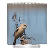 Perched Bearded Reedling Juvenile Shower Curtain