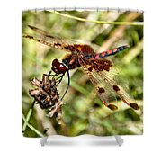 Perched Dragon Shower Curtain