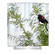 Perched In A Tree Shower Curtain