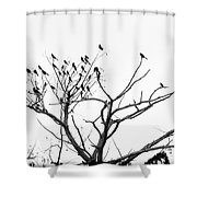 Perched Majestically Shower Curtain