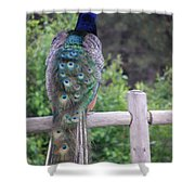 Perched Peacock Shower Curtain