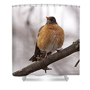 Perched Robin Shower Curtain