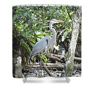 Perching Blue Heron Shower Curtain