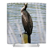Perching Cormorant Shower Curtain