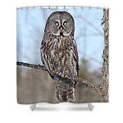 Perching Perfect Shower Curtain
