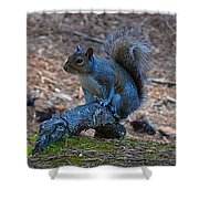 Perching Squirrel Shower Curtain