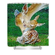 Pere David Deer And Fawn Shower Curtain