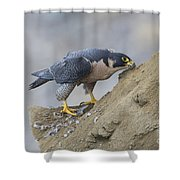 Peregrine Cleaning Beak Shower Curtain