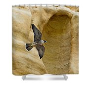 Peregrine Falcon Flying By Cliff Shower Curtain