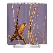Peregrine Falcon Shower Curtain