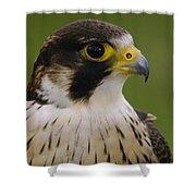 Peregrine Falcon Portrait Ecuador Shower Curtain