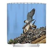 Peregrine Falcons - 5 Shower Curtain