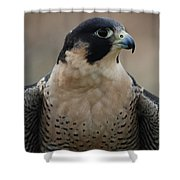 Peregrine Profile Shower Curtain