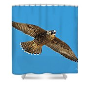 Peregrine Young Screaming For Food Shower Curtain