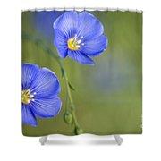 Perennial Flax Flowers Shower Curtain