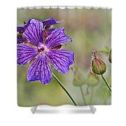 Perennial Geranium Shower Curtain