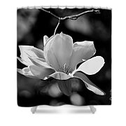 Perfect Bloom Magnolia In White Shower Curtain