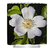 Perfect Dog Rose Shower Curtain