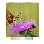 Perfect Hummingbird Moth Shower Curtain