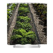 Perfect Lines Shower Curtain by Anne Gilbert