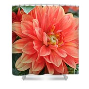 Perfect Petals Shower Curtain