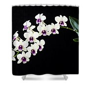 Perfect Phalaenopsis Orchid Poster Shower Curtain