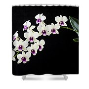 Perfect Phalaenopsis Orchid Shower Curtain