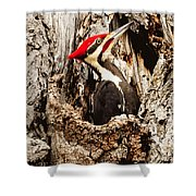 Perfect Pileated Pose Shower Curtain
