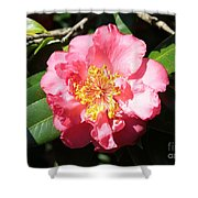 Perfect Pink Camellia Shower Curtain