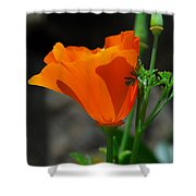 Perfect Poppy Shower Curtain