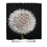 Perfect Puffball Shower Curtain