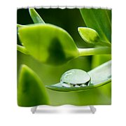 Perfect Raindrop Shower Curtain