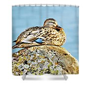 Perfect Resting Rock Shower Curtain