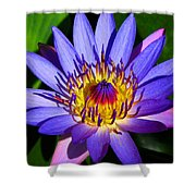 Perfect Water Lily Shower Curtain