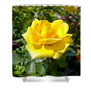 Perfect Yellow Rose Shower Curtain