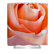 Perfection In A Peach Rose Shower Curtain
