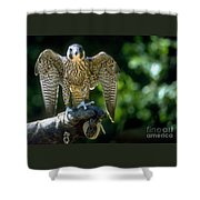 Perigrine Falcon Shower Curtain