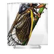 Periodical Cicada Shower Curtain