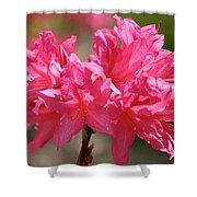 Periscope Pink Shower Curtain