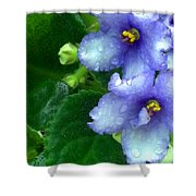 Periwinkle African Violets Shower Curtain