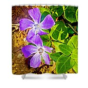 Periwinkles By West Point Inn On Mount Tamalpias-california  Shower Curtain