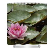 Perky Lily Shower Curtain