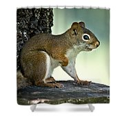 Perky Squirrel Shower Curtain